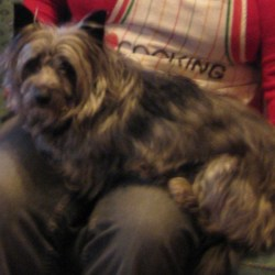 Lost dog on 10 Mar 2010 in Kinsealy, Swords, Co.Dublin. Female, mixed breed, small, shaggy dark grey coat. Age 9. Very friendly but also nervous, very gentle dog. Road sense not great, owners very worried please contact asap if you see her.086 0664841