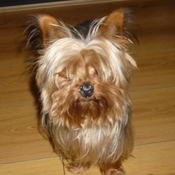 Lost dog on 17 Jun 2016 in Ayrfield, Dublin 13.