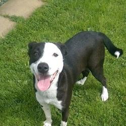 Found dog on 02 Aug 2016 in Elmview Close Navan. found, ..1yr Female Lab x Collie x..found in Elmview Close Navan...ref 291.....contact Meath pound on 087 0676766...thanks..