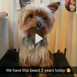 Lost dog on 05 Feb 2017 in Santry/ballymun. Tea cup Yorkshire terrier went missing in santry Sunday morning the 5th, her name is pippy and she is microchipped  Contact numbers: Ashley-0851595285 Vanessa-0876726084