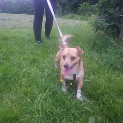 Lost dog on 20 Jun 2017 in Confey co kildare.