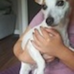 Found dog on 28 Sep 2017 in Old Fingles Rd. found...Found 24th sept on Old Fingles Rd. Handed in to ashton Monday 25th Sept