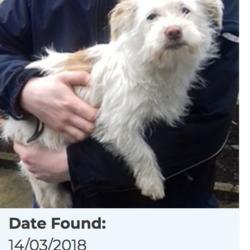 Found dog on 15 Mar 2018 in Kiltalown Crescent, Tallaght... found, now in the dublin dog pound...Date Found: 14/03/2018 Location Found: Kiltalown Crescent, Tallaght