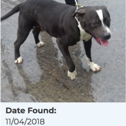 Dog looking for home 12 Apr 2018 in dublin.pound. surrendered needs a home, contact the dublin dog....Date Found: