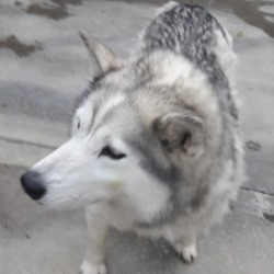 Found dog on 23 Apr 2018 in Liffey valley . found, now in the dublin dog pound...ound Liffey valley out side mcdonalds warden was called now in Ashton pound please share get this beauty home