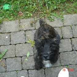 Found dog on 17 May 2009 in Kilkenny. Male Terrier (cross bred perhaps) Black colour with golden hi-lights and white chest. Found outside Texaco garage on the College road in Kilkenny. Friendly, seems well looked after dog.