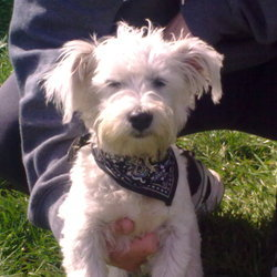 Found dog on 03 May 2009 in Cork City, Fitzgerald's Park. Found in Fitzgerald's Park - Cork City on Sunday 3rd May 2009. Please contact Lisa on 087-2797439