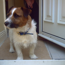 Found dog on 28 May 2009 in St. Anne's Park Clontarf. Found Jack Russel Mix in St Anne's Park Clontarf on Thursday (28th ). Very Friendly. call 085 11 55 988
