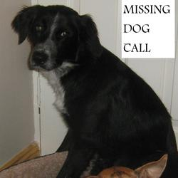 Lost dog on 01 Mar 2012 in Ringaskiddy cork. Collie x missing ringaskiddy black dog with white chest and nose. Was wearin red collar 