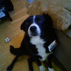 Lost dog on 30 Jun 2012 in Templeglantine. Lost