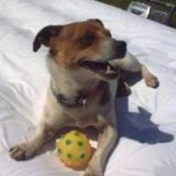 Lost dog on 09 Jan 2013 in Cork. Our Lovely dog Stephen (Jack Russell) went missing from the Old Head / Garrettstown area on the 9th Jan 2013- please let us know if you have seen him as we think he was taken.