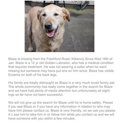 Lost dog on 16 Jan 2013 in Kilkenny . Male Golden Labrador, 12 yrs old, lost in Kilkenny on Wed 16th Jan '13