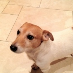 Lost dog on 09 Apr 2013 in Limerick city. found - all is well