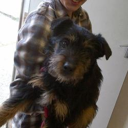 Found dog on 01 Apr 2013 in trim. Dog found  Bellowstown Trim. She is a quiet and gentle lady, very soft-natured. Female terrier cross. Brown and black. Less than a year old.  https://www.facebook.com/photo.php?fbid=592094930819910&set=a.420031508026254.109278.110925495603525&type=1&theater   please contact dogs in distress !