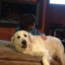 Lost dog on 22 Apr 2013 in Blanchardstown. Golden retriever ( cream colour) Lost in Hartstown park today, 22/04. Very friendly and belongs to three small children who are heartbroken tonight. Please phone 0833617447. Reward offered.