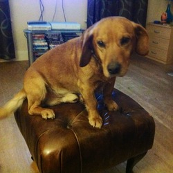 Lost dog on 30 Apr 2013 in Inniscarra, cork . Missing from Berrings,Inniscarra , cork, little golden Labrador cross, male, very friendly, blue collar with ID tag but he may have lost it 0876839900