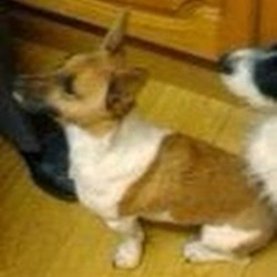 Lost dog on 09 Dec 2013 in Nangor Road/ western industrial estate/clondalkin. Lost jack russell, 3 yr old male. Responds to name Archie. Not wearing a collar. He has small tan spots on his front paws please contact Bernie on 085 1668088 if found please. Lost around Nangor Rd, Clondalkin, western industrial estate