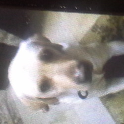 Lost dog on 21 Dec 2013 in Kilkenny. Golden Labradour lost 8/9 days ago in Kilmoganny County Kilkenny. 4 Years old and she was with a black labradour puppy (4 months old). The lab is a bitch and responds to the name 'Bailey'. Reward given, please phone 0874175093.
