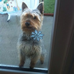 Lost dog on 01 Jan 2014 in Drimnagh. George is missing since New Year's Day from Cooley rd drimnagh d12 is very nervous dog please keep an eye out if seen ring 0863646999