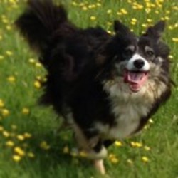 Lost dog on 08 Mar 2014 in Ballymore-Eustace, Co. Kildare.. Border Collie, female approx 3yrs, black & white with some tan markings. Small in size. Working sheepdog & pet. Greatly missed. 086 1634766