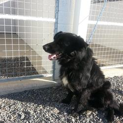 Found dog on 25 Mar 2014 in athboy. .2yrs old approx..ref 179..found in Athboy....friendly boy...if you can help this boy contact Meath pound on 087 0676766
