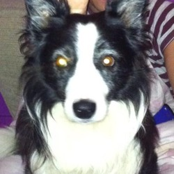 Lost dog on 16 May 2014 in Cork City/Ballinlough/Douglas. **Missing Dog**