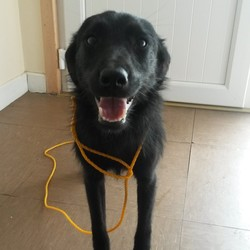 Found dog on 21 Jul 2014 in Co Wicklow. Found Wicklow Town, Contact Wicklow Dog Pound on 040444873 for information. Available for rehoming from 28/7/14 if owner does not come forward.