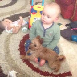 Lost dog on 11 Aug 2014 in clondalkin. small jack russell jumped out winfow this moring wasnt wearing her collar at the time contact me on this number 0851590401 or 0852873293 her hair is a little longer now