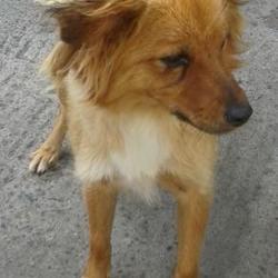Found dog on 20 Aug 2014 in clondalkin. FOUND in clondalkin, now in the dublin dog pound