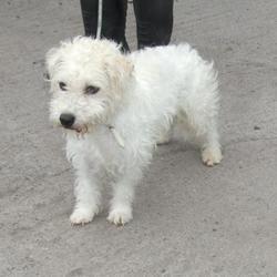 Found dog on 29 Aug 2014 in DUBLIN. FOUND NOW IN DUBLIN DOG POUND