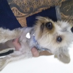 Found dog on 01 Sep 2014 in fingal cemetery. Dog found in fingal cemetery at 9pm this evening. Some sort of terrier with pale blue collar.