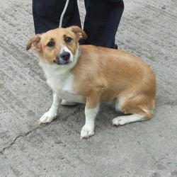 Found dog on 08 Sep 2014 in tallaght. found, now in dublin dog pound.. Date Found: Friday, September 5, 2014 Location Found: Swiftbrook , Tallaght