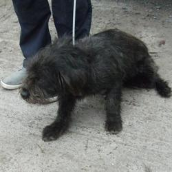 Found dog on 08 Sep 2014 in lucan. found, now in dublin dog pound.. Date Found: Friday, September 5, 2014 Location Found: Haydens Lane , Lucan