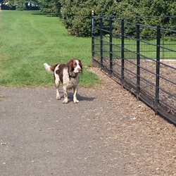 Lost dog on 11 Sep 2014 in Dublin Anna's park. This dog has been see in Anna's park. He look lost. He follow AS half hour but I couldn't even touch HIM, was very afraid.