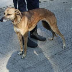 Found dog on 11 Sep 2014 in tallaght. found, now in dublin dog pound... Date Found: Tuesday, September 9, 2014 Location Found: Tallaght , Village