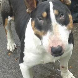 Found dog on 26 Sep 2014 in tallaght. found, now in dublin dog pound  Date Found: Thursday, September 25, 2014 Location Found: Sundale Est , Tallaght