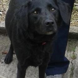 Found dog on 26 Sep 2014 in tallaght. found black lab now in dublin dog pound.. Date Found: Thursday, September 25, 2014 Location Found: Tymon Park , Tallaght