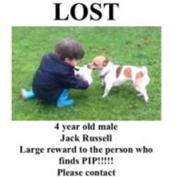 Lost dog on 06 Oct 2014 in limerick. lost.. Jack Russell lost if found very large reward no questions asked .  Family heart broken ref to http://www.donedeal.ie/lostandfound-for-sale/lost-dog/7794492