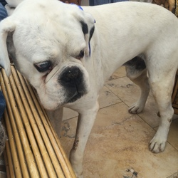 Lost dog on 07 Oct 2014 in Meath. ***DOG NOW FOUND*** Thank you