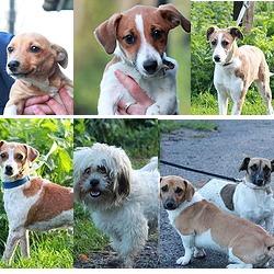 Found dog on 18 Oct 2014 in dublin. found, now in dublin dog pound