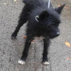 Found dog on 23 Oct 2014 in clondalkin. found black / white terrier now in dublin dog pound.. Date Found: Wednesday, October 22, 2014 Location Found: Clondalkin , Clondalkin