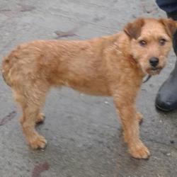 Found dog on 25 Nov 2014 in palmerstown. found now in dublin dog pound.. Date Found: Monday, November 24, 2014 Location Found: Village , Palmerston