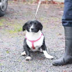 Found dog on 25 Nov 2014 in dublin. found, now in dublin dog pound..