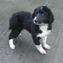 Found dog on 26 Nov 2014 in tallaght. found black, white collie x now in dublin dog pound.. Date Found: Monday, November 24, 2014 Location Found: Belgard Road , Tallaght