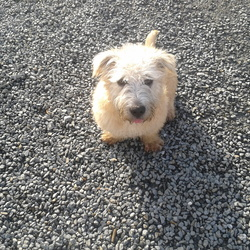 Found dog on 25 Nov 2014 in Ballinascorney. Medium size blonde/tan male dog found on Ballinascorney road upper co.Dublin  25th November at 4.30 pm . Please contact me for futher information.. He's missing his family.  : (