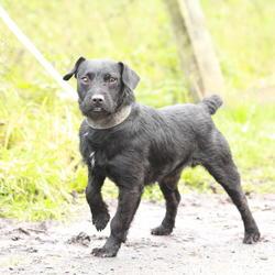 Found dog on 11 Dec 2014 in dublin...... found black, white dog now in the dublin dog pound......