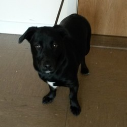 Found dog on 17 Dec 2014 in Wicklow. Found in Bray, Co Wicklow. Contact Wicklow Dog Pound for information on 040444873