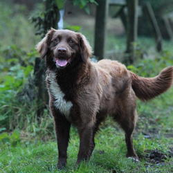 Found dog on 23 Dec 2014 in dublin. found , now in the dublin dog pound..