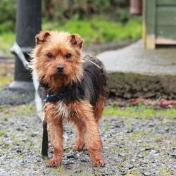 Found dog on 23 Dec 2014 in dublin. found terrier, now in the dublin dog pound...