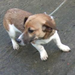 Found dog on 27 Jan 2015 in tallaght. found jrt now in the dublin dog pound.. Date Found: Monday, January 26, 2015 Location Found: Watergate Park , Tallaght